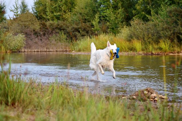 Abby-Sommer4-1 %Hundeblog