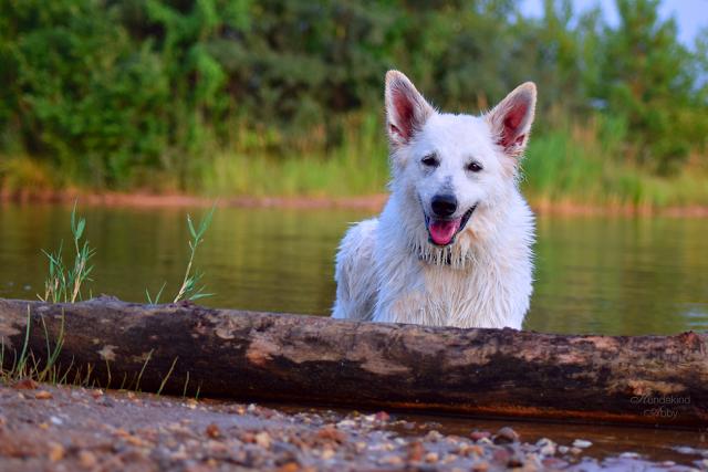 Abby-Sommer5-1 %Hundeblog