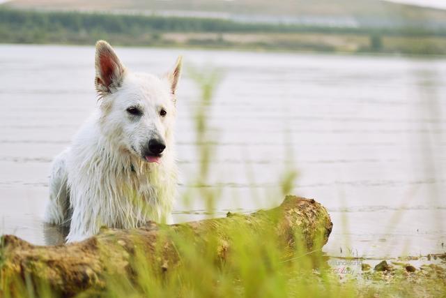 Abby-Sommer7-1 %Hundeblog