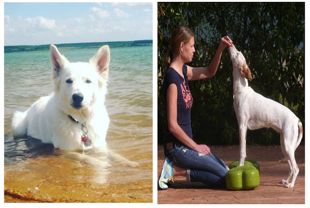 Dominostein-DoggyFitness-1 %Hundeblog
