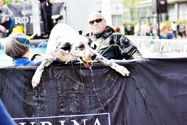 Haustiermesse-Dogdiving3-1 %Hundeblog