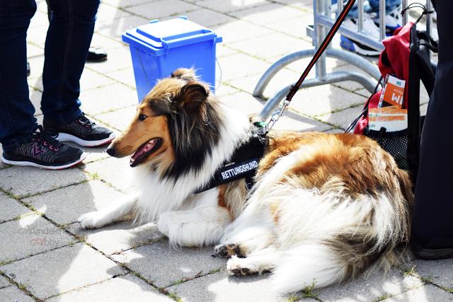 Haustiermesse-Hunde2-1 %Hundeblog
