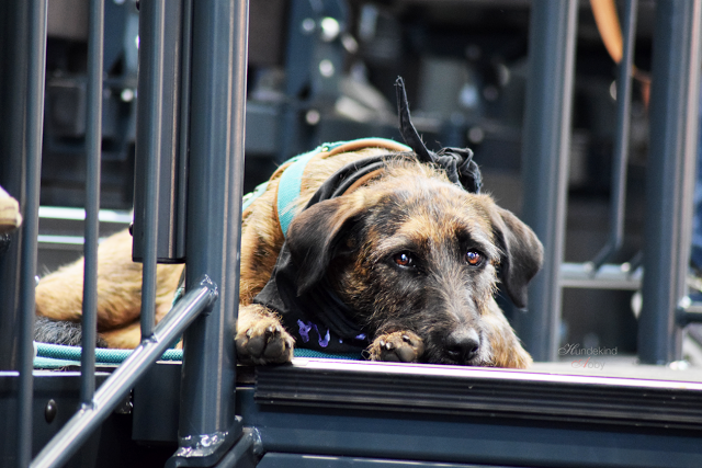 Haustiermesse-Hunde3-1 %Hundeblog