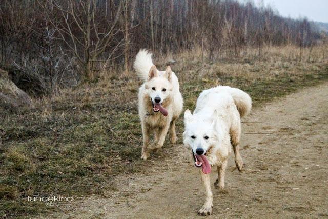 IMG_1060-1 %Hundeblog