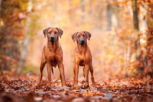 Mareike_Konrad_Fotografie_2-1 %Hundeblog