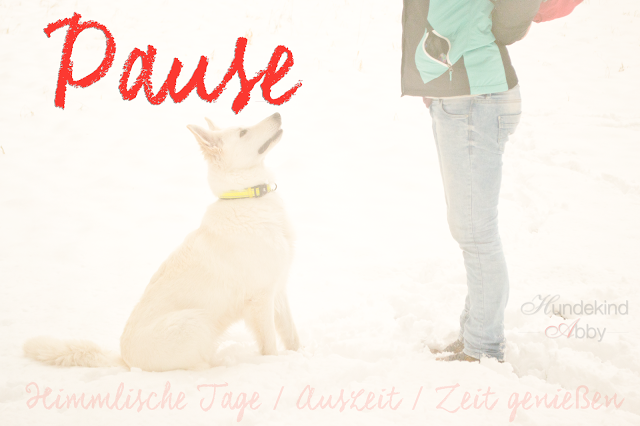 Pause-1 %Hundeblog