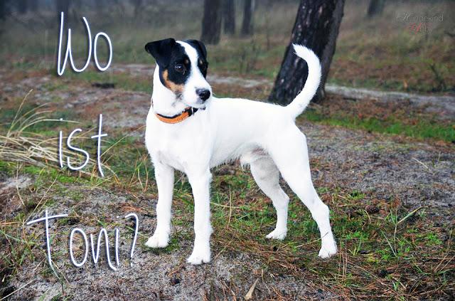 WoistToni2-1 %Hundeblog