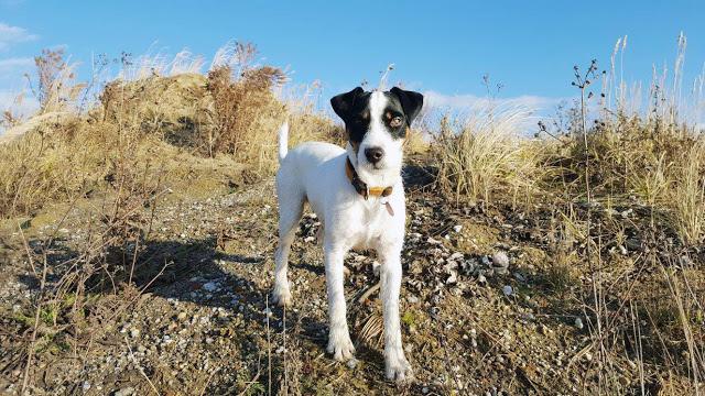 WoistToni3-1 %Hundeblog