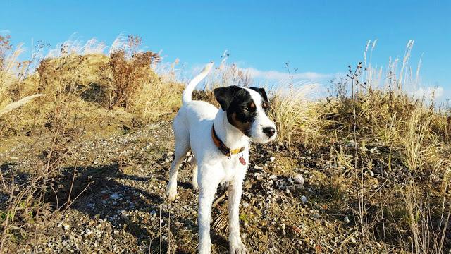 WoistToni4-1 %Hundeblog