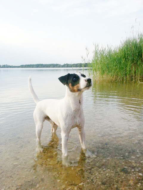 WoistToni5-1 %Hundeblog