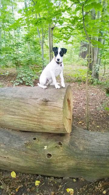 WoistToni6-1 %Hundeblog