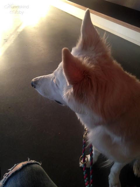 beimTierarzt-1 %Hundeblog