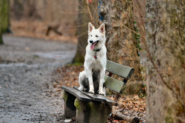 Bild3-2-1 %Hundeblog