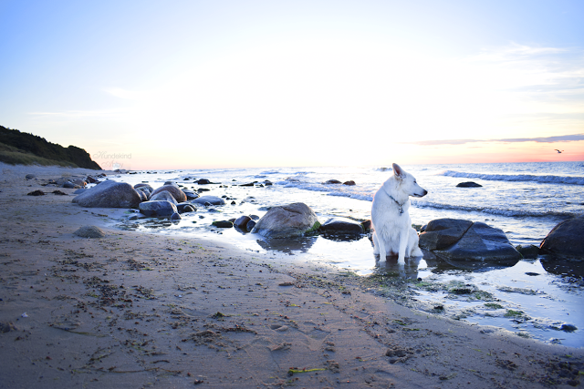DSC_0059-3 %Hundeblog