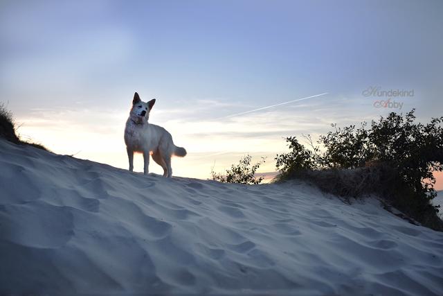 HundekindAbby-1 %Hundeblog