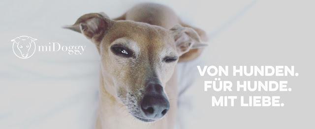 miDoggyCommunity1-1 %Hundeblog