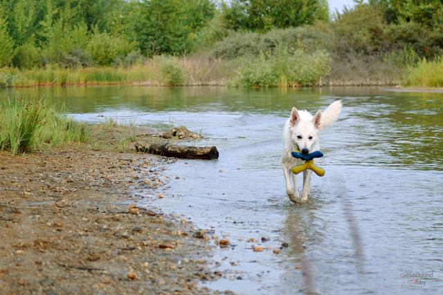 Abby-Sommer6-1 %Hundeblog