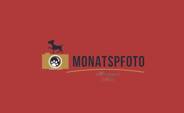 Monatspfoto-1 %Hundeblog