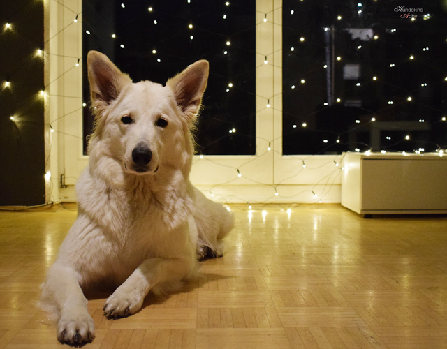 Abby-1 %Hundeblog
