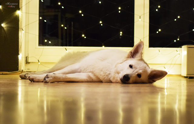 AbbyBoden-1 %Hundeblog
