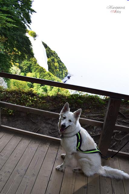 AbbyKreidefelsen-1 %Hundeblog