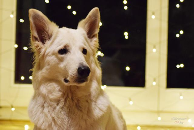 AbbySeite-1 %Hundeblog