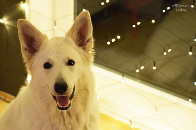 Abbylaechelt-1 %Hundeblog