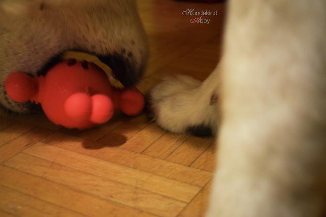 Futterball-Befuellt-1 %Hundeblog