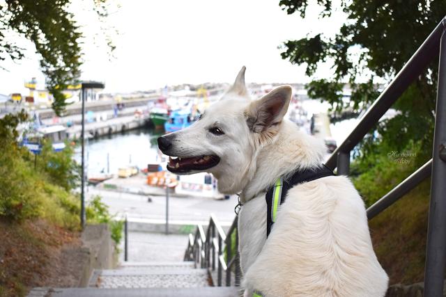 Sassnitz-Abby-1 %Hundeblog
