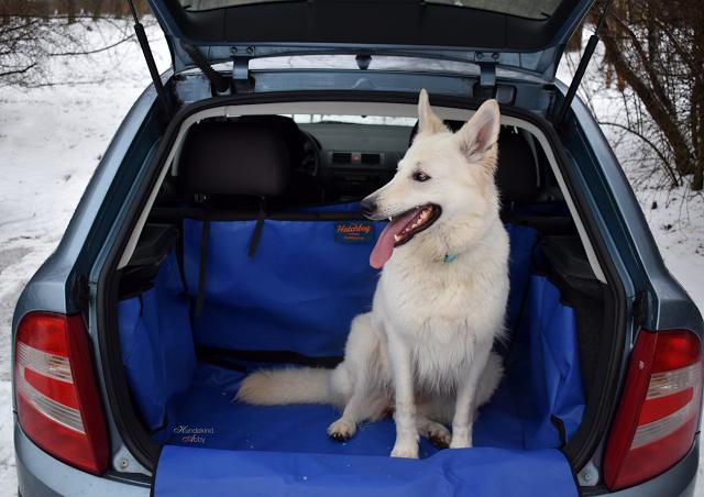AbbyundHatchbag-Gut-1 %Hundeblog