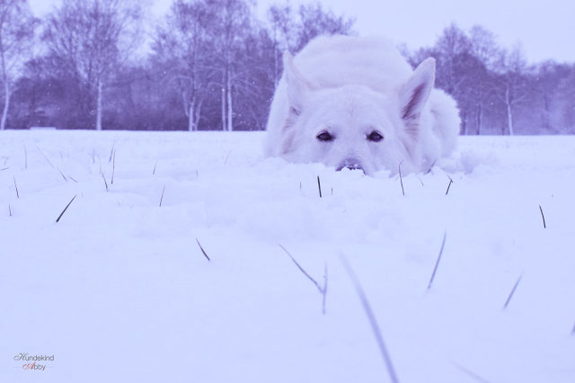 Schneehase-1 %Hundeblog