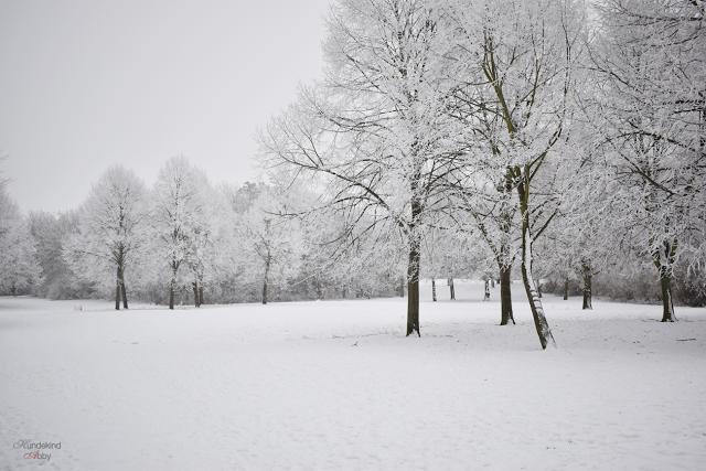 Schneewunderland2-1 %Hundeblog