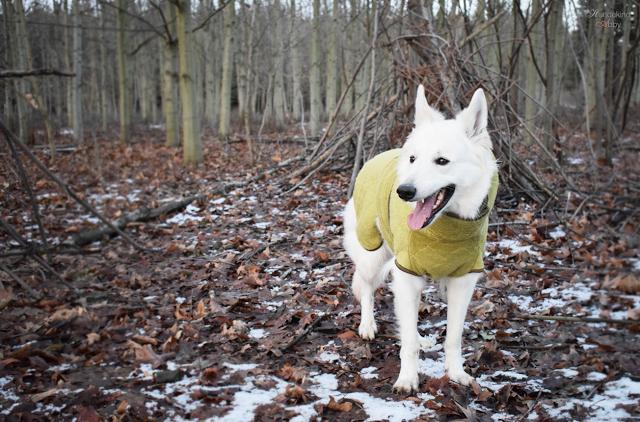 Siccaro-Bademantel-1 %Hundeblog