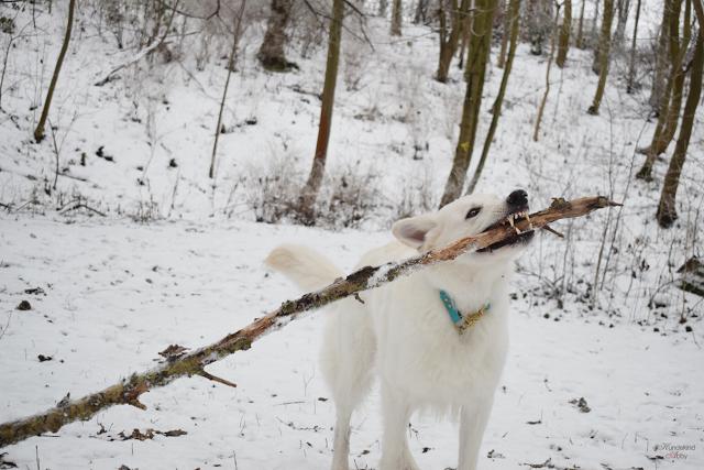 Stock2-1 %Hundeblog