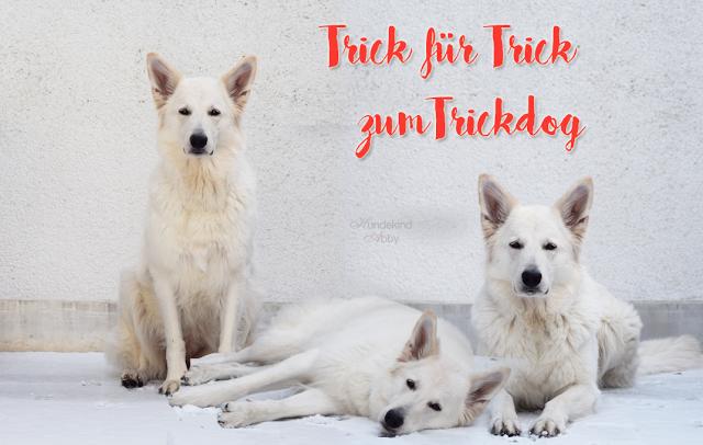 TrickfuerTrick-5 %Hundeblog