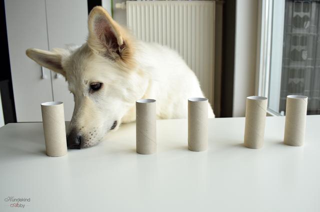 Abby-Klopapier2-1 %Hundeblog