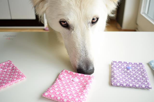 Abby-Schnueffelmemory2-1 %Hundeblog