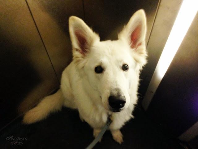 Arzt1-1 %Hundeblog