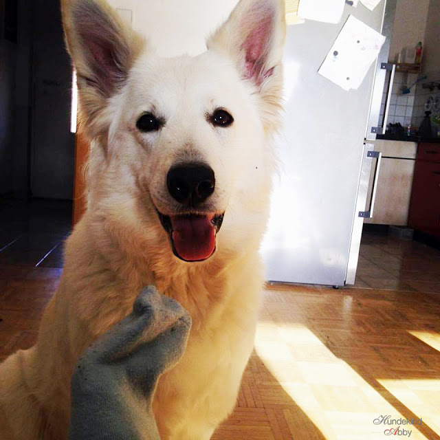 Abby-Socke-1 %Hundeblog
