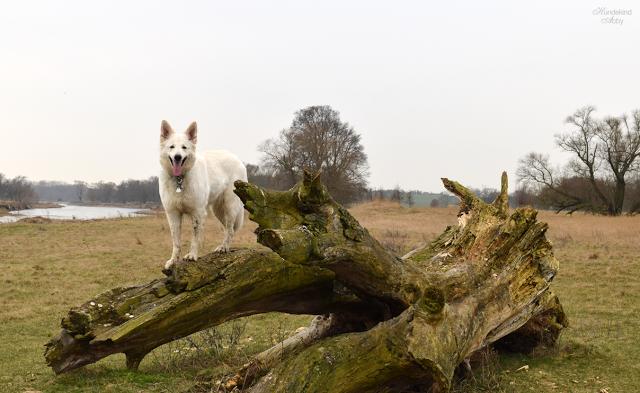 AbbyaufStammstehend-2 %Hundeblog