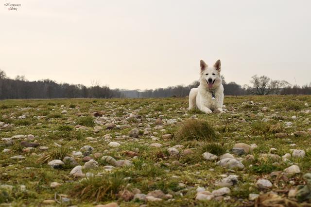 AbbyaufSteinen-1 %Hundeblog