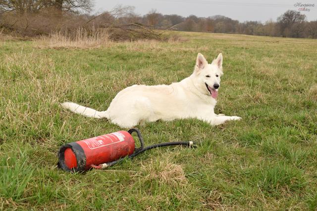 Feuerloescher-1 %Hundeblog