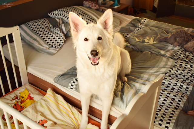 HundimBett2-1 %Hundeblog