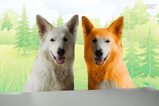 CapundCapper-1 %Hundeblog