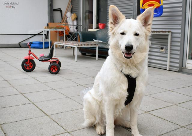 GeschirrDankSDU-1 %Hundeblog