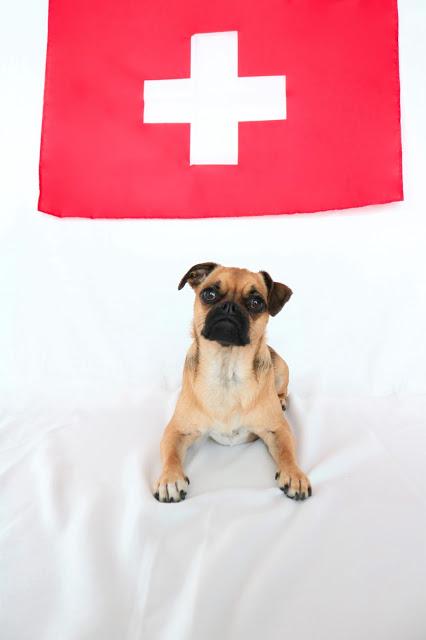 Mia-Swissdog-1 %Hundeblog