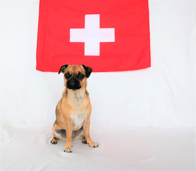 Swissdog-Mia-1 %Hundeblog