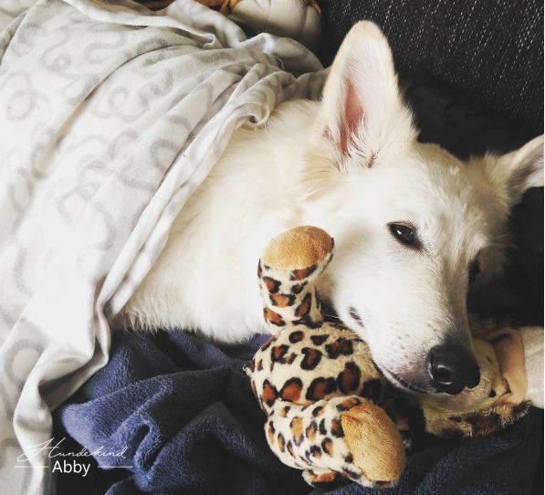 Abbykuschelt-1 %Hundeblog