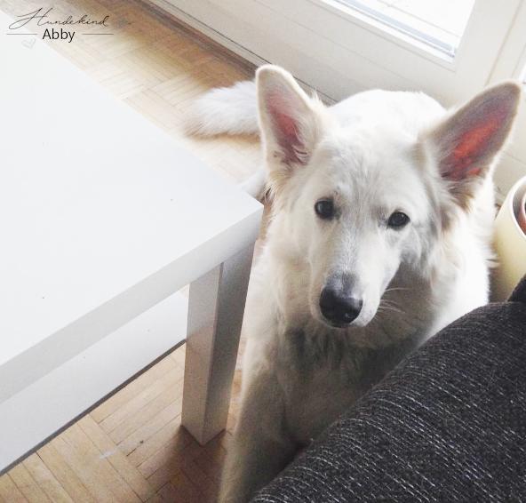Abbyliegt-1 %Hundeblog