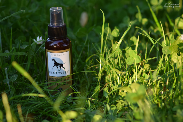 AntiTiqueSpray-1 %Hundeblog
